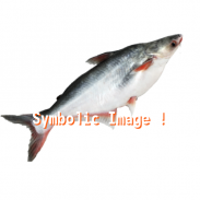 LHD  Lasthourdeal Fresh fish fresh meat  local shopping  best offers around you